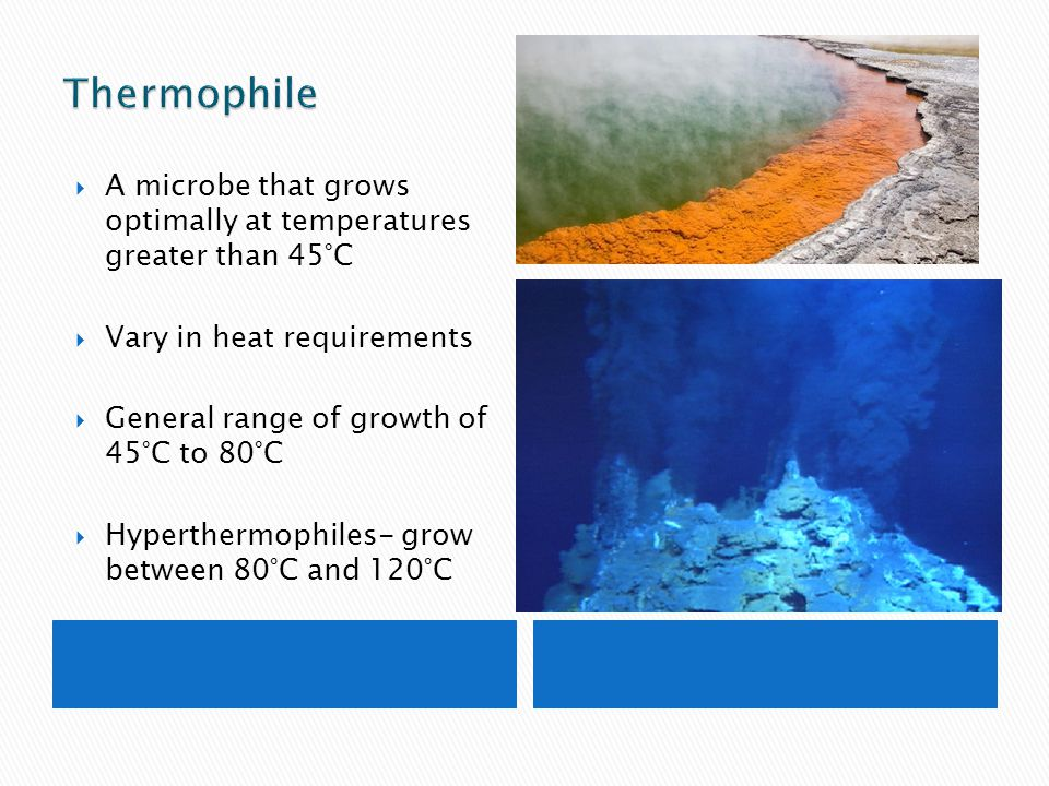 Thermophile A microbe that grows optimally at temperatures greater than 45°C. Vary in heat requirements.