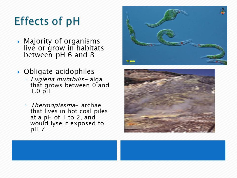 Effects of pH Majority of organisms live or grow in habitats between pH 6 and 8. Obligate acidophiles.