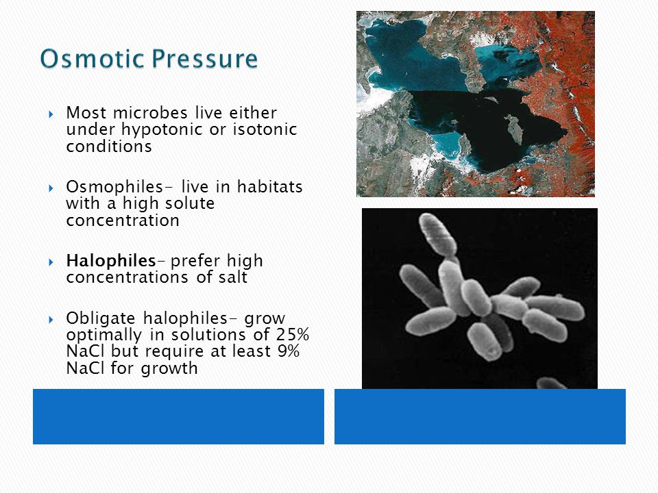 Osmotic Pressure Most microbes live either under hypotonic or isotonic conditions. Osmophiles- live in habitats with a high solute concentration.