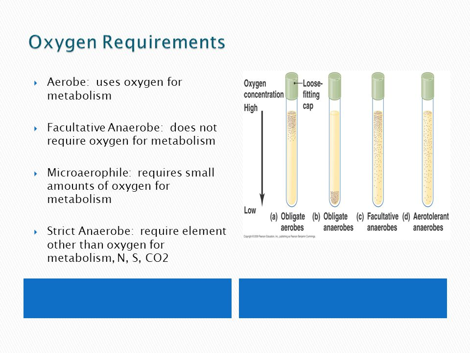 Oxygen Requirements Aerobe: uses oxygen for metabolism