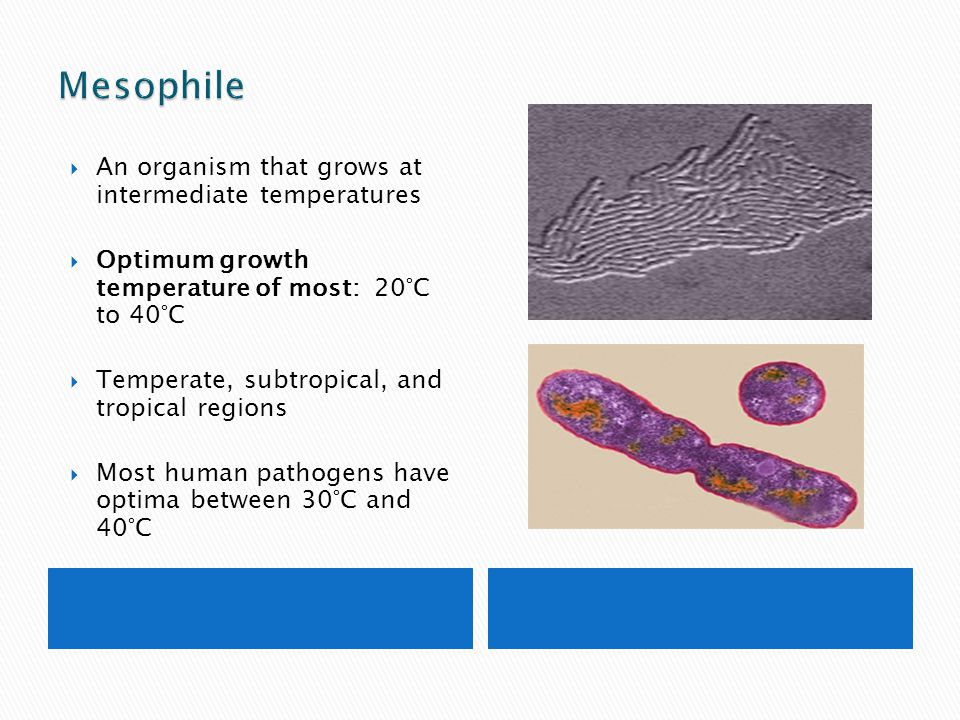 Mesophile An organism that grows at intermediate temperatures