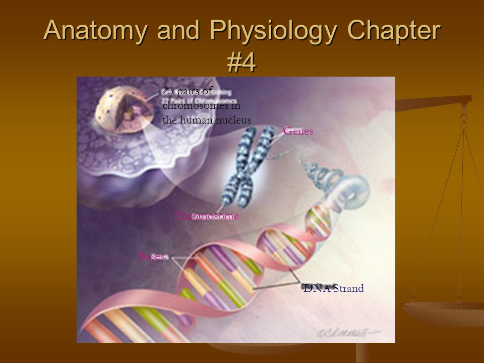 Anatomy and Physiology Chapter #4 - ppt video online download