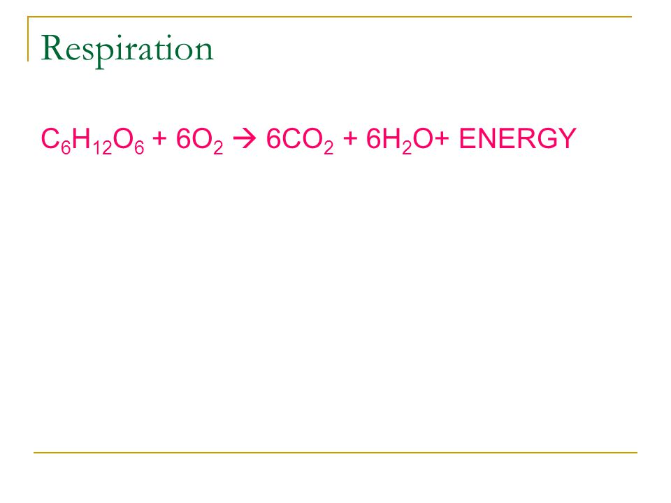 Respiration C6H12O6 + 6O2  6CO2 + 6H2O+ ENERGY
