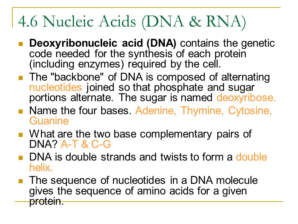 4.6 Nucleic Acids (DNA & RNA)