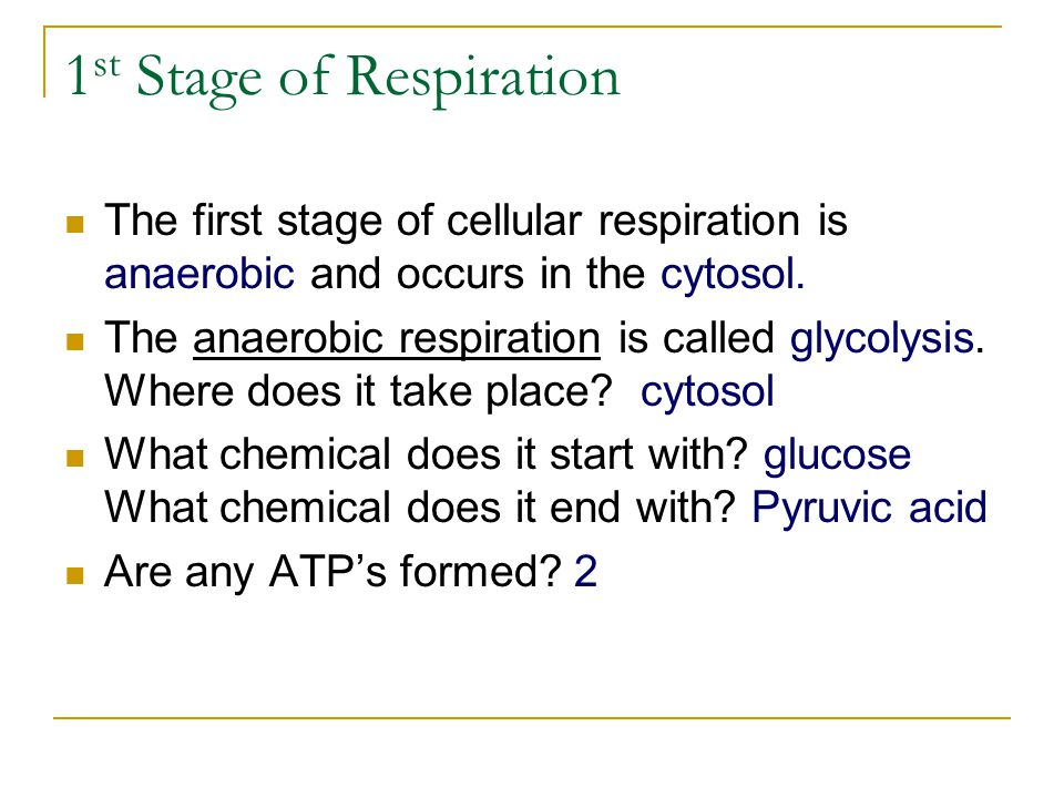 1st Stage of Respiration