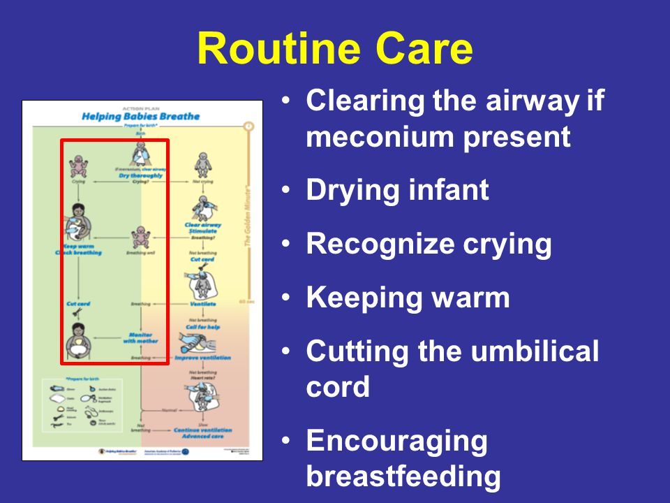 Routine Care Clearing the airway if meconium present Drying infant