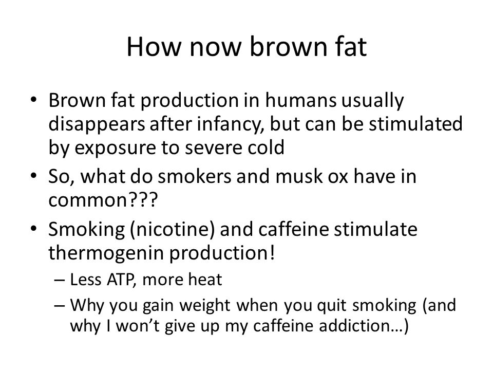How now brown fat Brown fat production in humans usually disappears after infancy, but can be stimulated by exposure to severe cold.