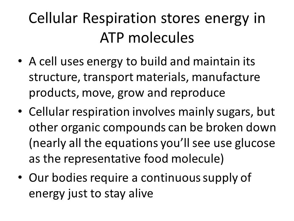 Cellular Respiration stores energy in ATP molecules