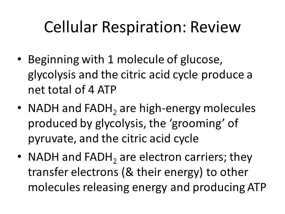 Cellular Respiration: Review