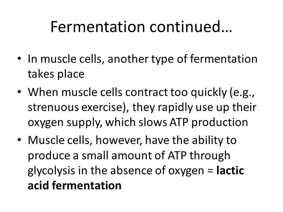 Fermentation continued…