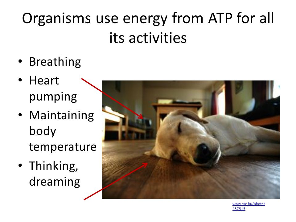 Organisms use energy from ATP for all its activities