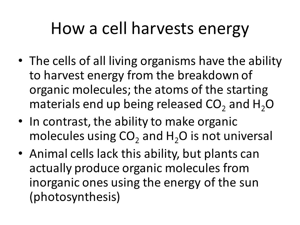 How a cell harvests energy