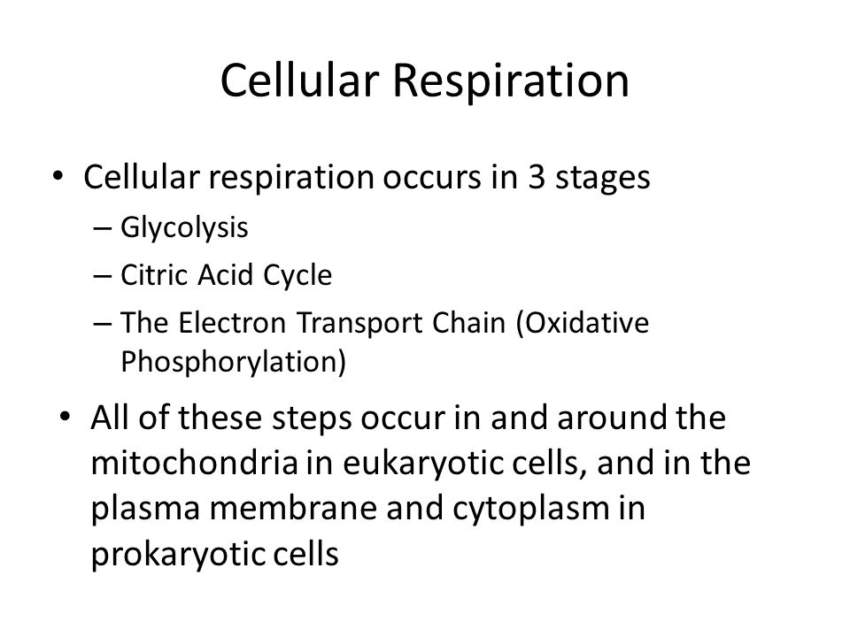 Cellular Respiration Cellular respiration occurs in 3 stages