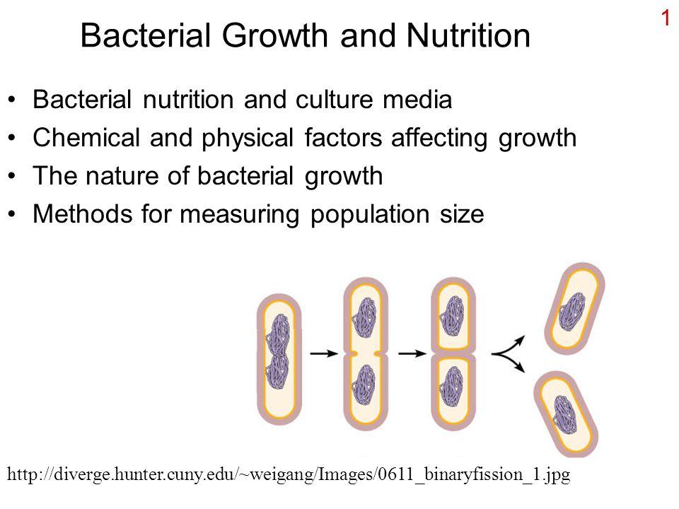 factors affecting the growth of bacteria
