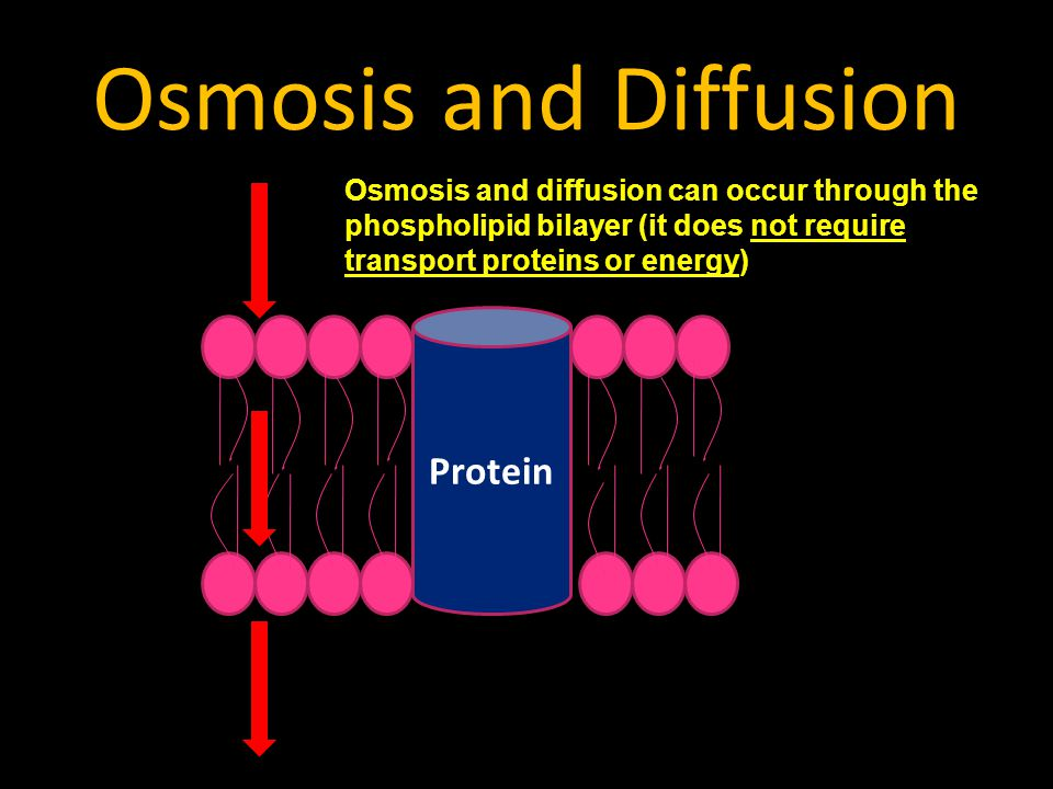 Osmosis and Diffusion Protein