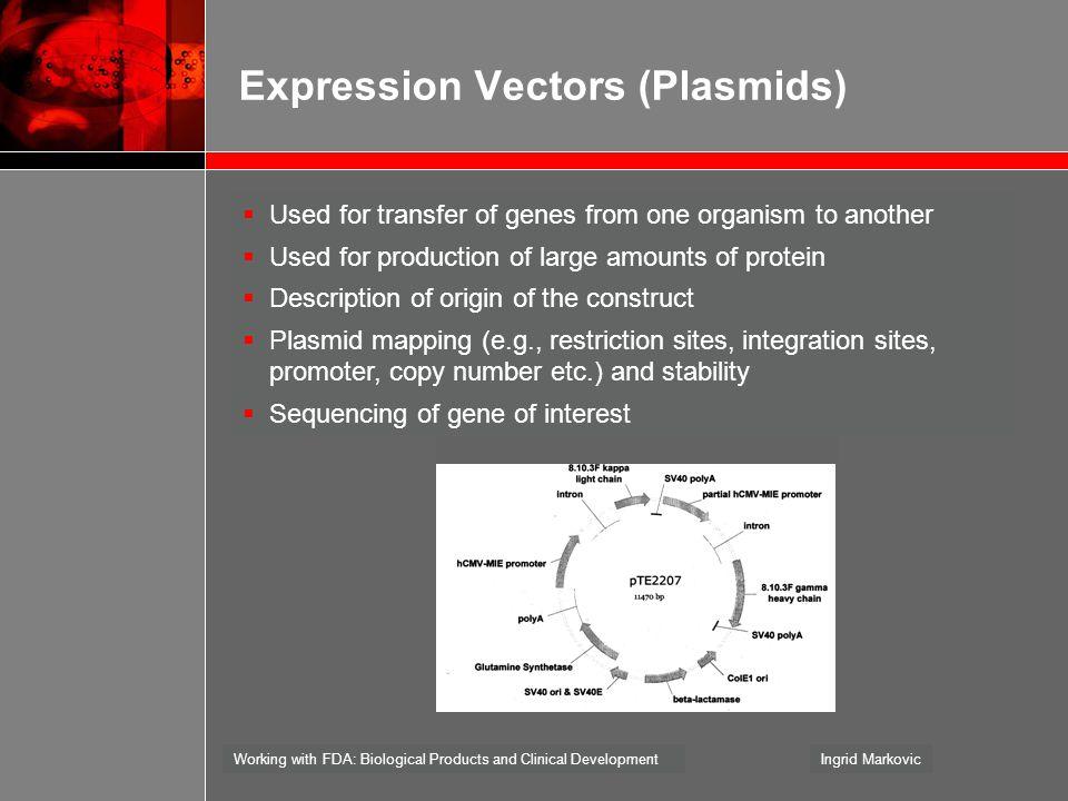 Expression Vectors (Plasmids)
