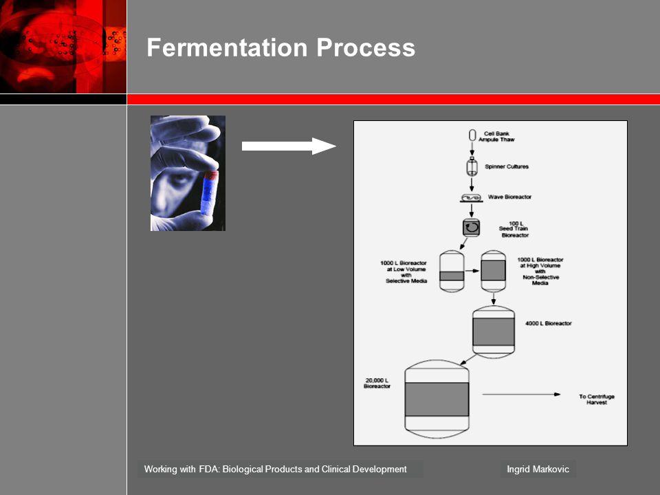 Fermentation Process