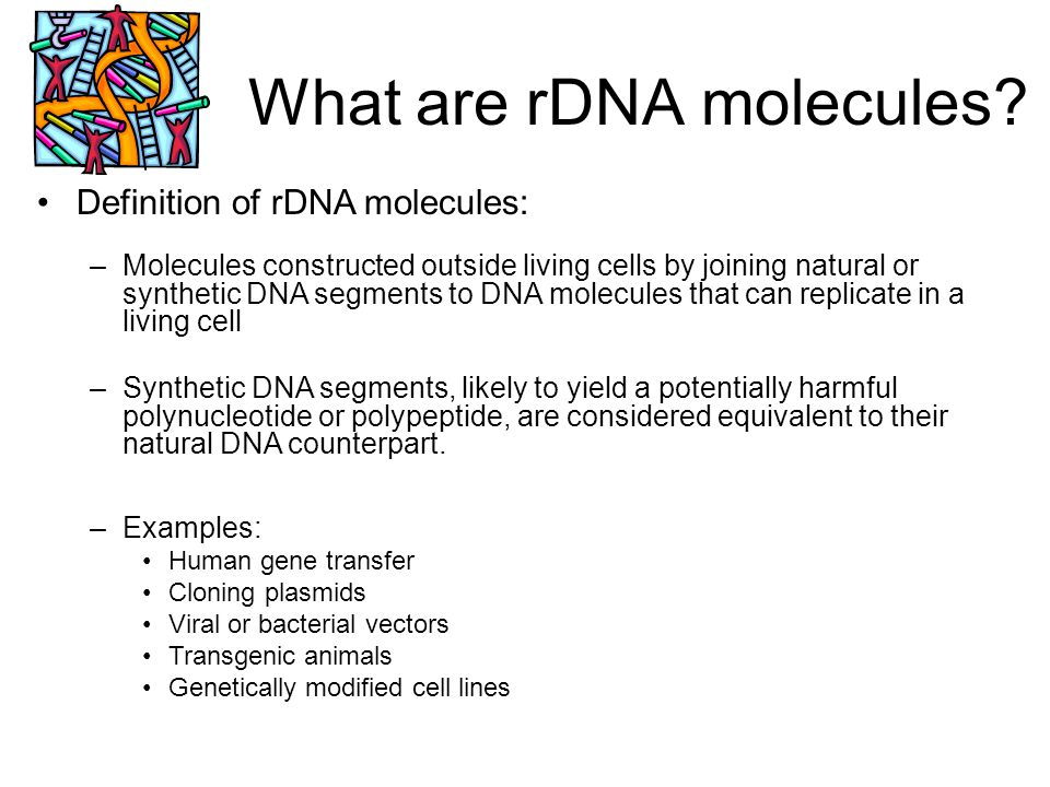 What are rDNA molecules