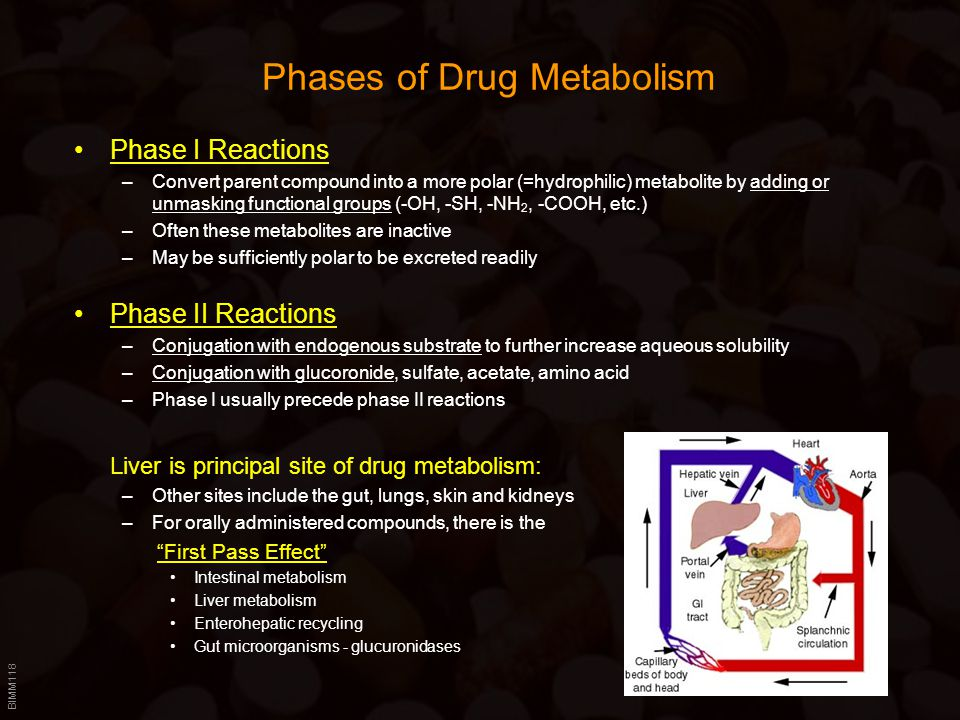 Phases of Drug Metabolism