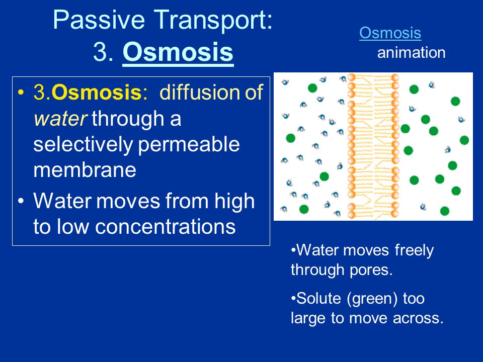 Passive Transport: 3. Osmosis