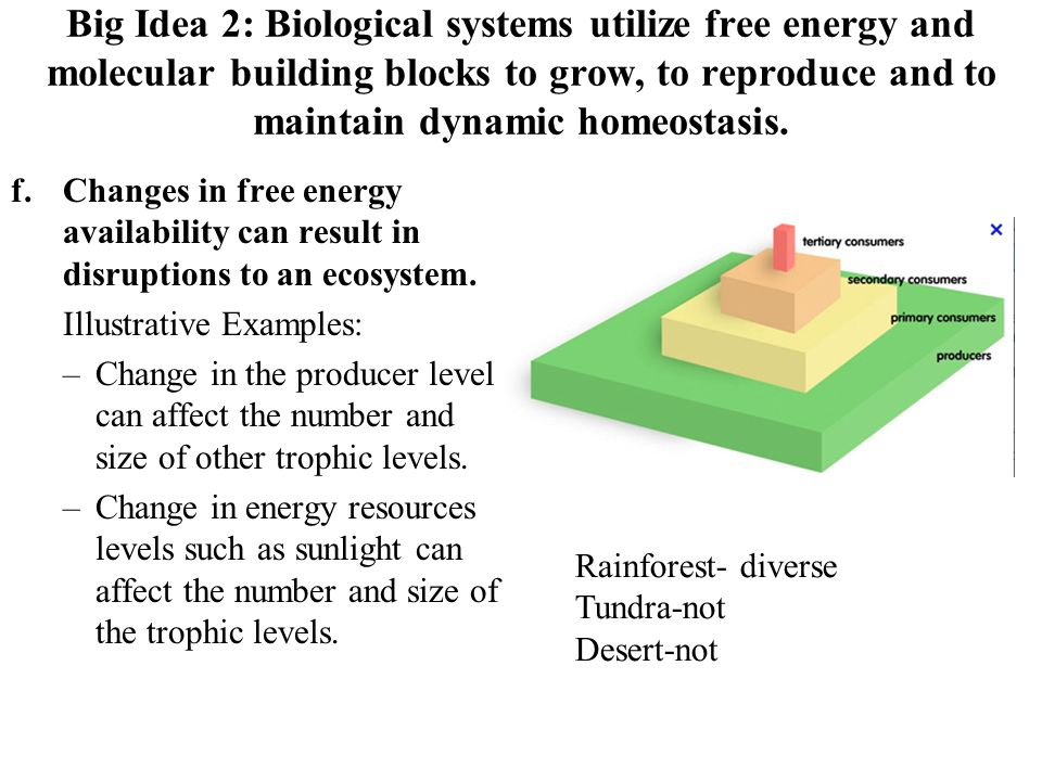 Big Idea 2: Biological systems utilize free energy and molecular building blocks to grow, to reproduce and to maintain dynamic homeostasis.