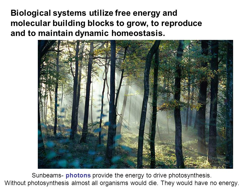 Biological systems utilize free energy and