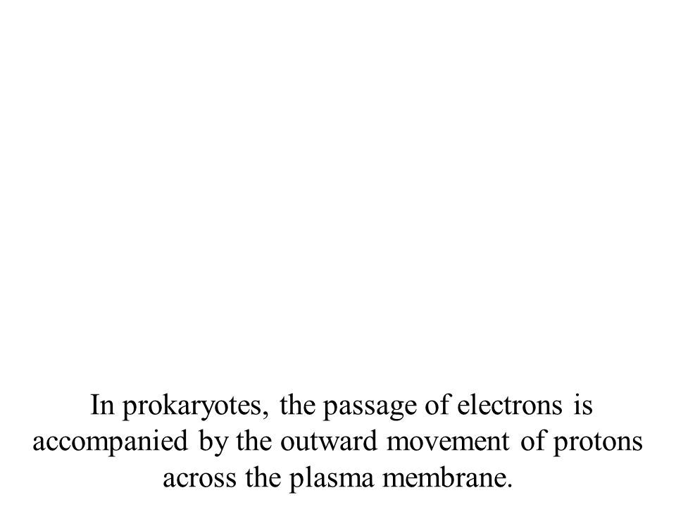 In prokaryotes, the passage of electrons is accompanied by the outward movement of protons across the plasma membrane.