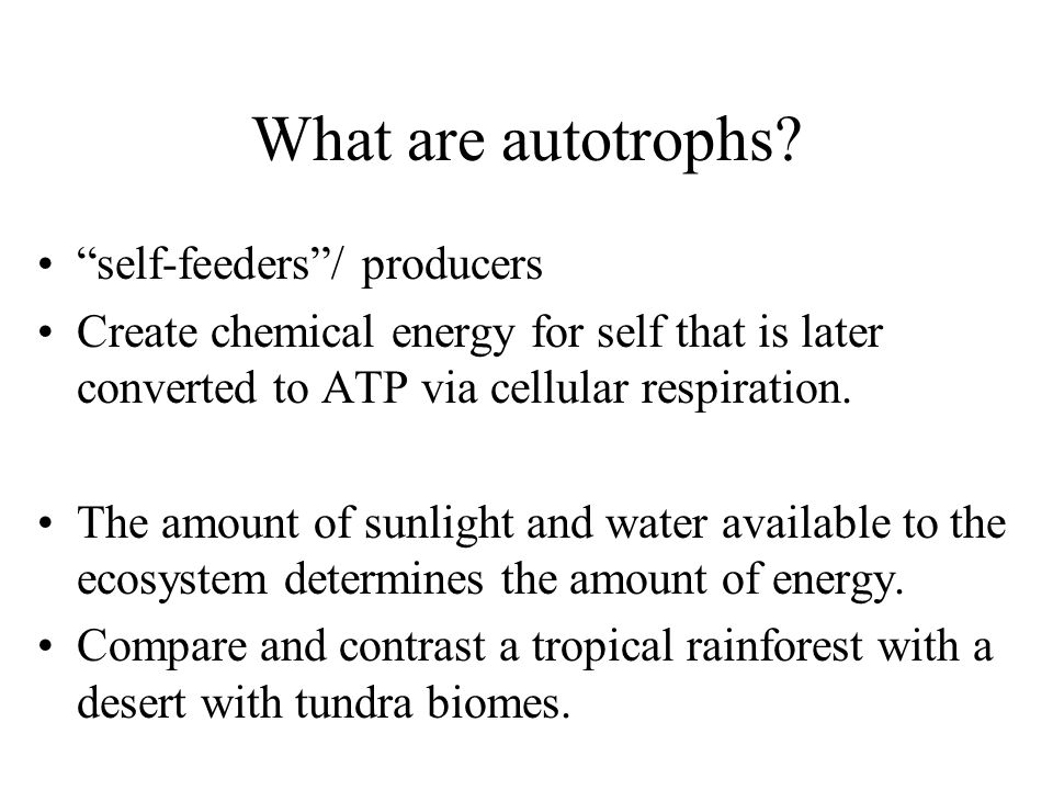 What are autotrophs self-feeders / producers