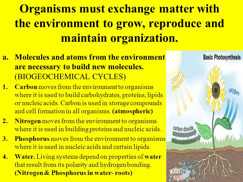 Organisms must exchange matter with the environment to grow, reproduce and maintain organization.
