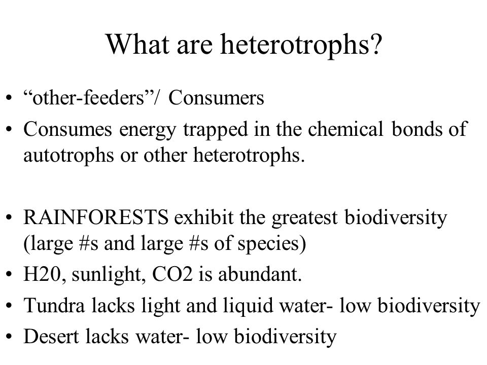 What are heterotrophs other-feeders / Consumers