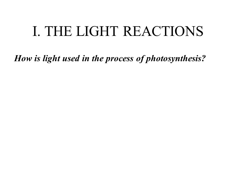 I. THE LIGHT REACTIONS How is light used in the process of photosynthesis
