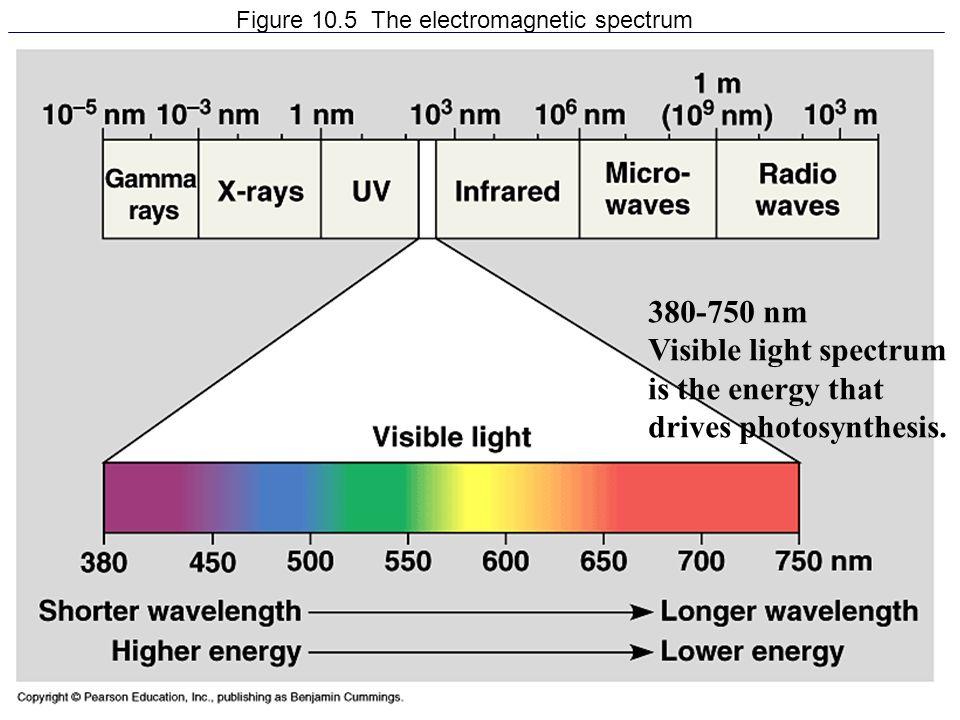 Figure 10.5 The electromagnetic spectrum