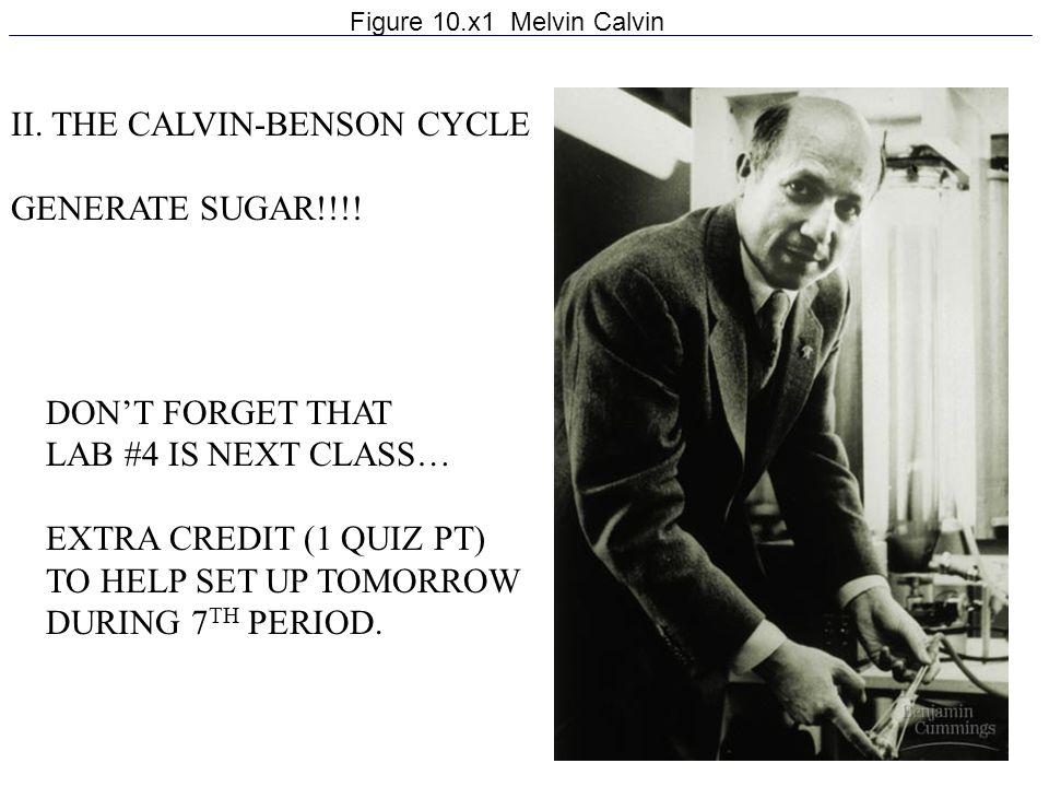 II. THE CALVIN-BENSON CYCLE GENERATE SUGAR!!!!