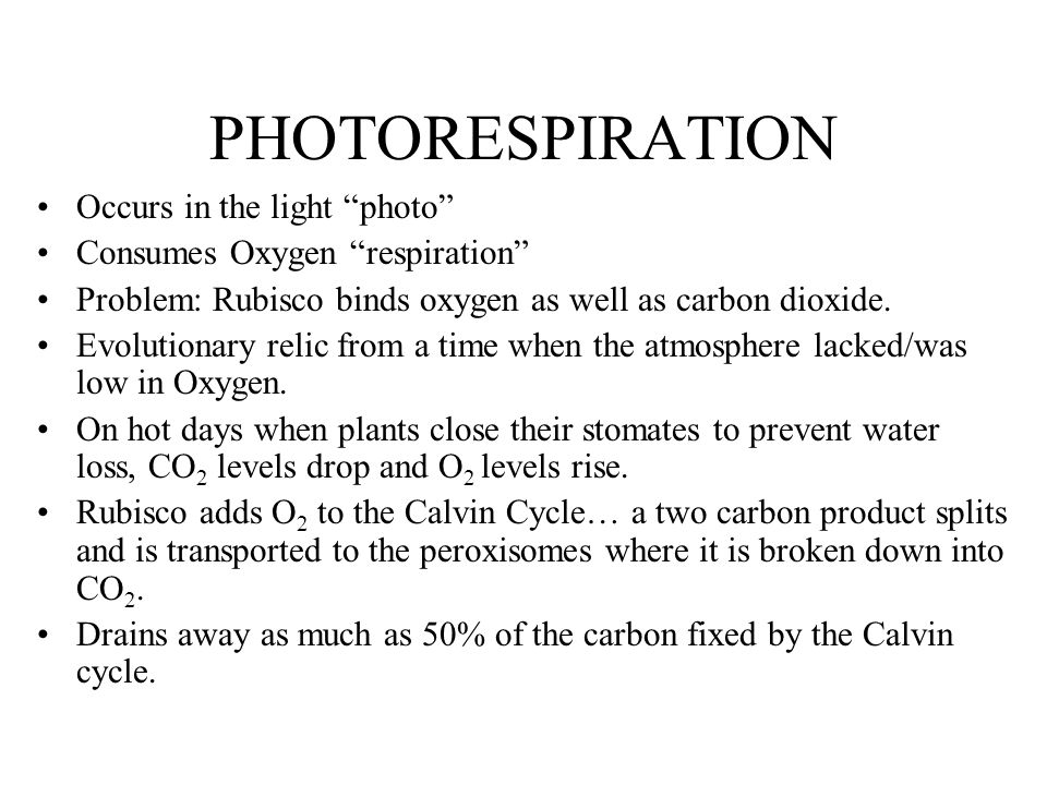 PHOTORESPIRATION Occurs in the light photo