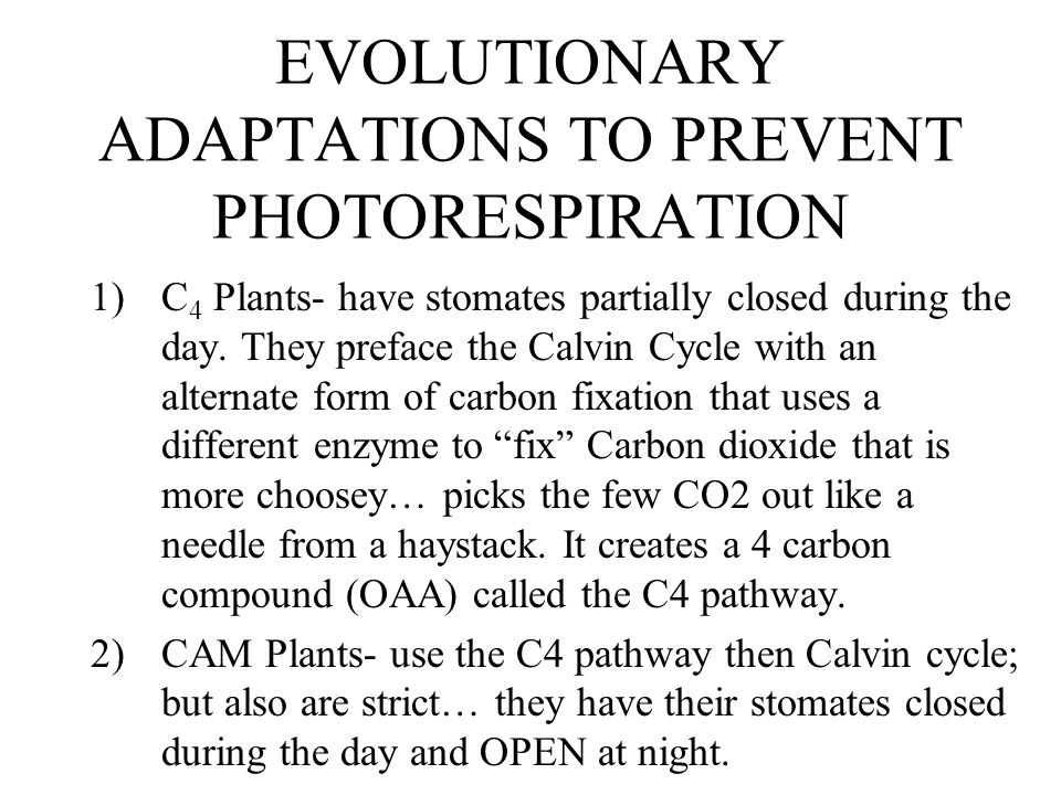 EVOLUTIONARY ADAPTATIONS TO PREVENT PHOTORESPIRATION