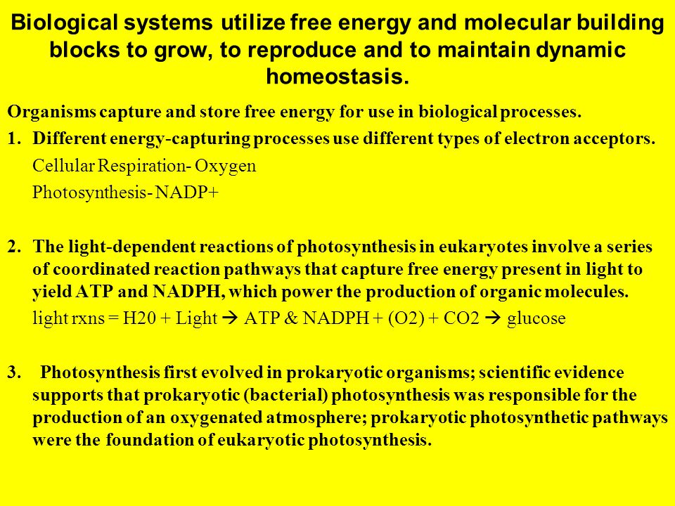 Biological systems utilize free energy and molecular building blocks to grow, to reproduce and to maintain dynamic homeostasis.