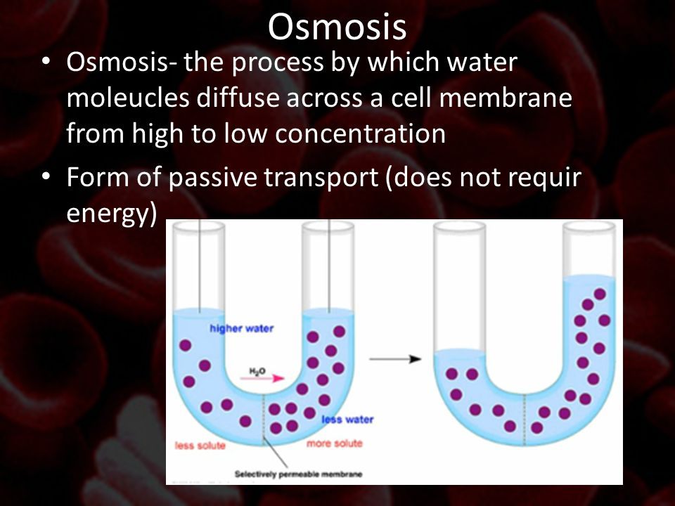 Osmosis Osmosis- the process by which water moleucles diffuse across a cell membrane from high to low concentration.