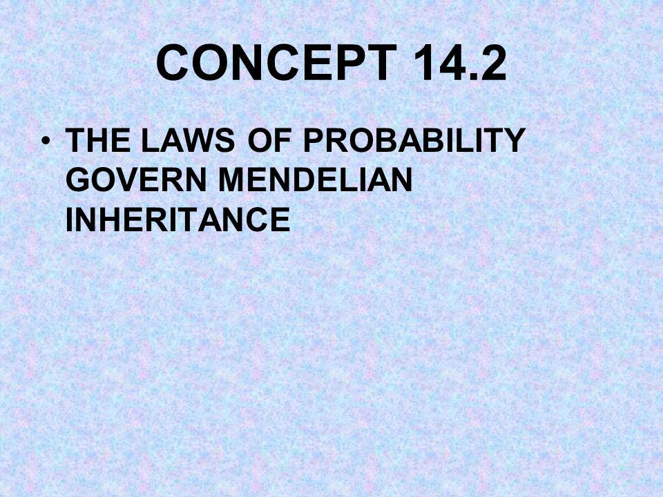CONCEPT 14.2 THE LAWS OF PROBABILITY GOVERN MENDELIAN INHERITANCE
