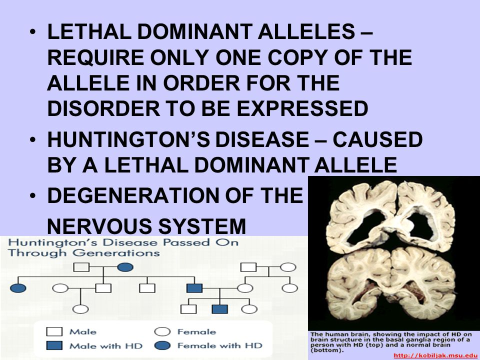 LETHAL DOMINANT ALLELES – REQUIRE ONLY ONE COPY OF THE ALLELE IN ORDER FOR THE DISORDER TO BE EXPRESSED