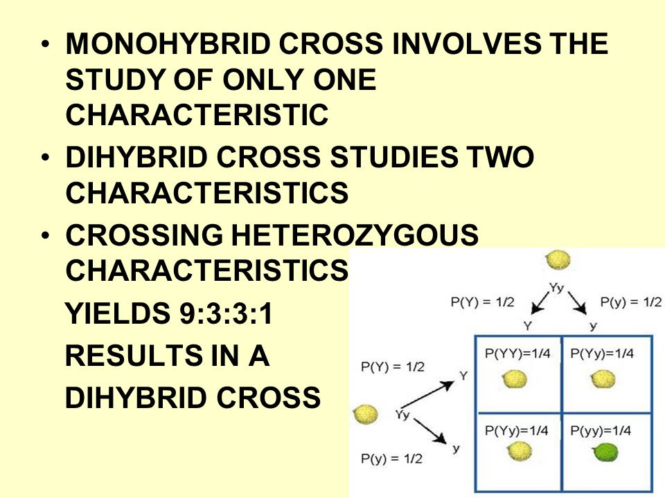 MONOHYBRID CROSS INVOLVES THE STUDY OF ONLY ONE CHARACTERISTIC