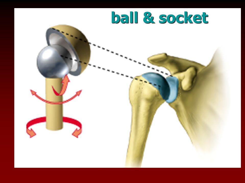 ball & socket