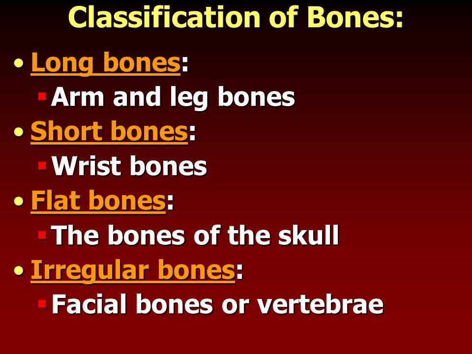 Classification of Bones: