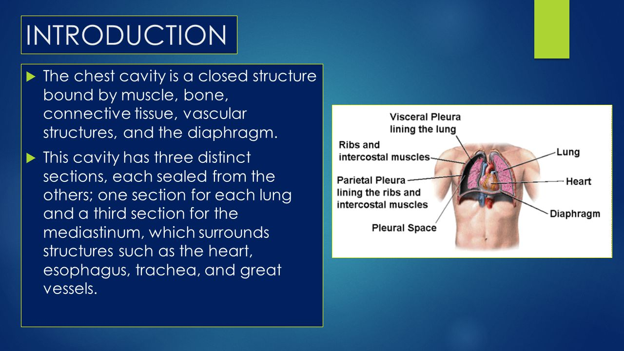 INTRODUCTION The chest cavity is a closed structure bound by muscle, bone, connective tissue, vascular structures, and the diaphragm.