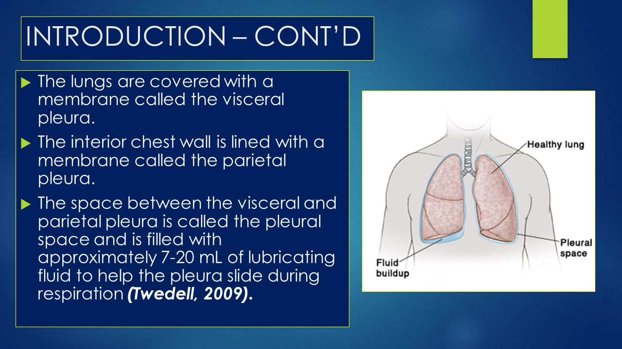 INTRODUCTION – CONT'D The lungs are covered with a membrane called the visceral pleura.