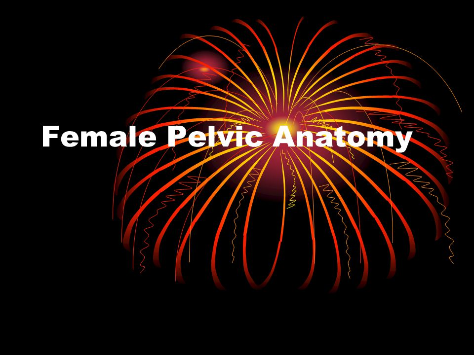 Female Pelvic Anatomy Ppt Video Online Download