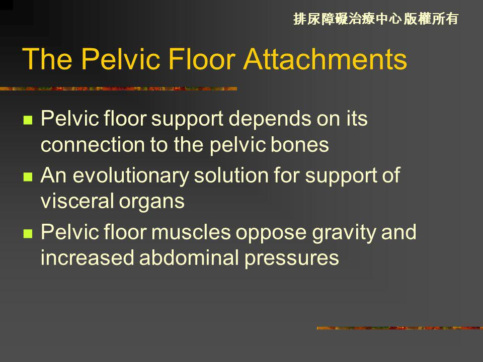 The Pelvic Floor Attachments