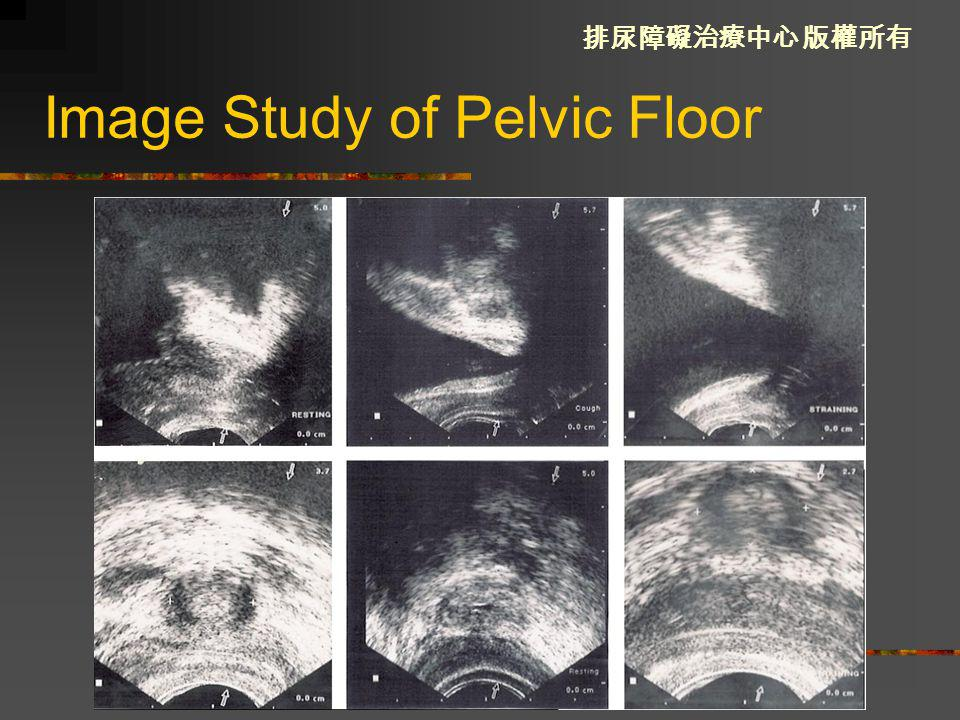 Image Study of Pelvic Floor