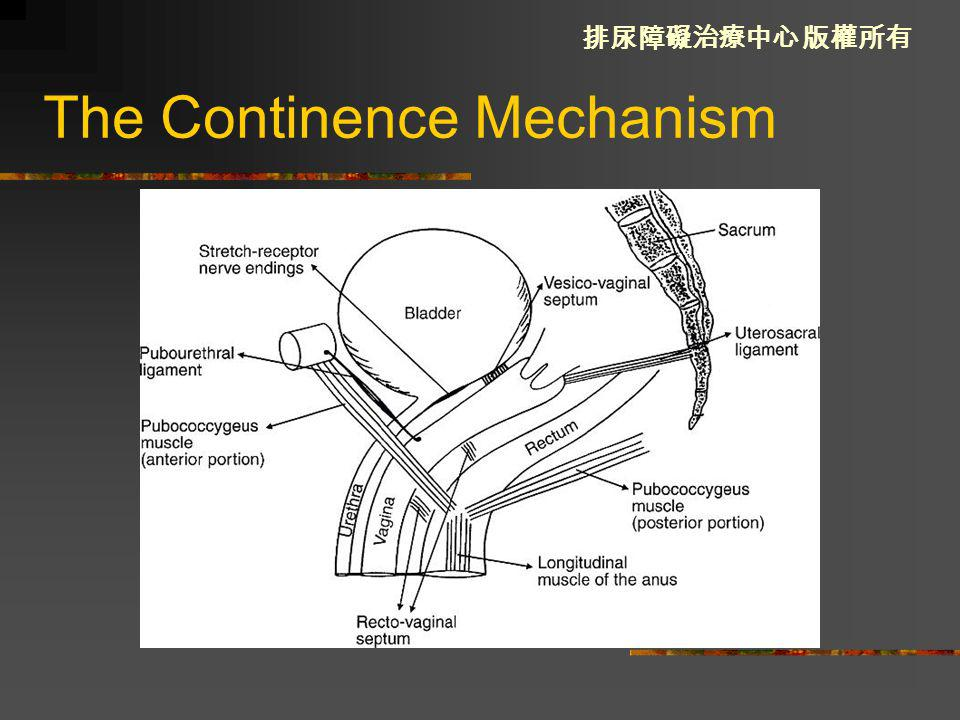 The Continence Mechanism