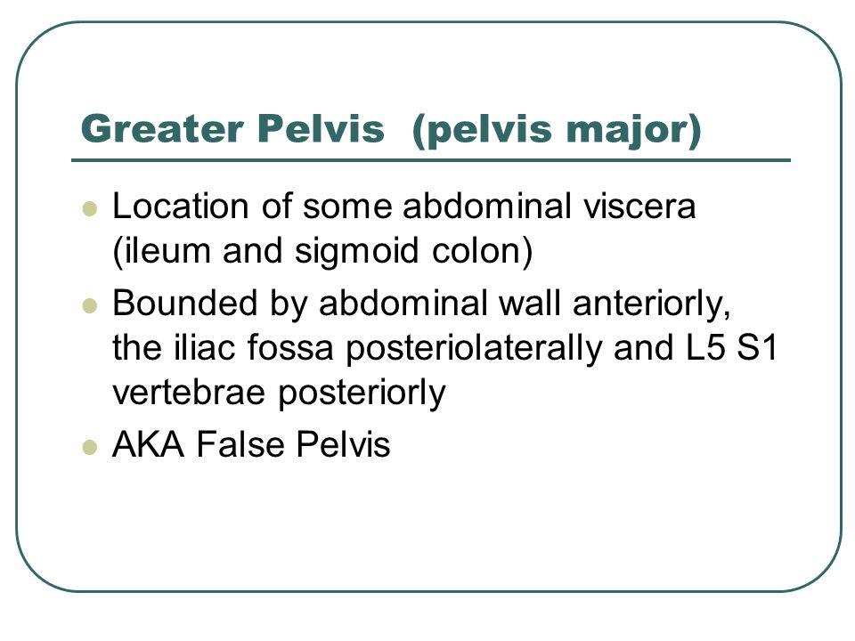 Greater Pelvis (pelvis major)