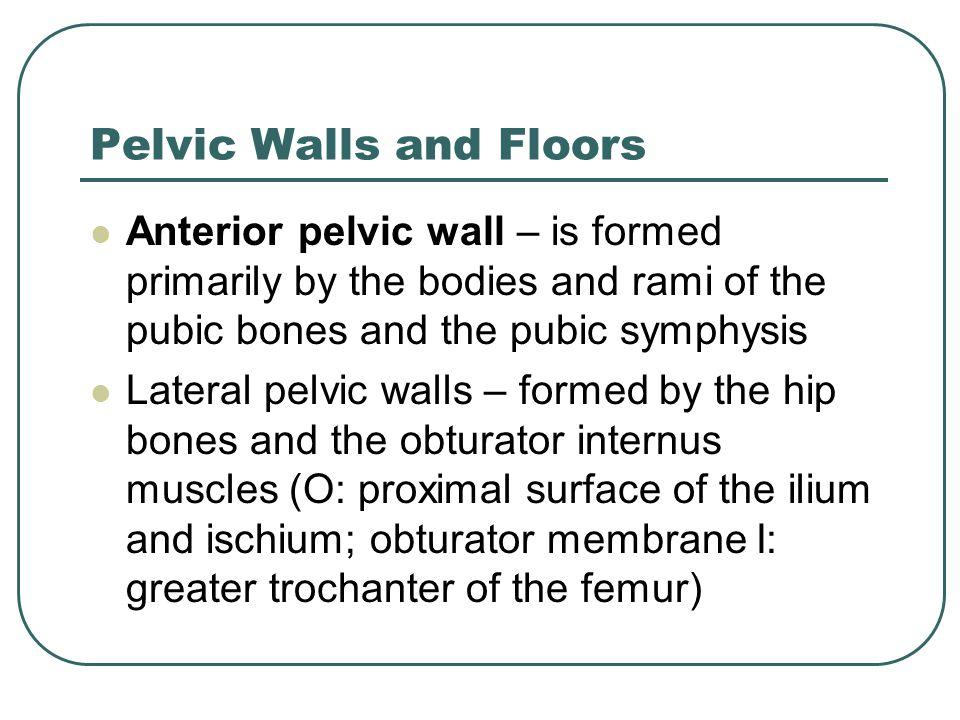 Pelvic Walls and Floors